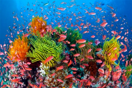 GreatBarrierReefcolourful